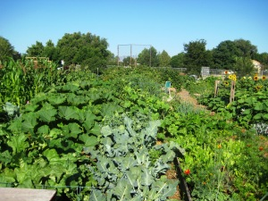The Rosedale Community Garden